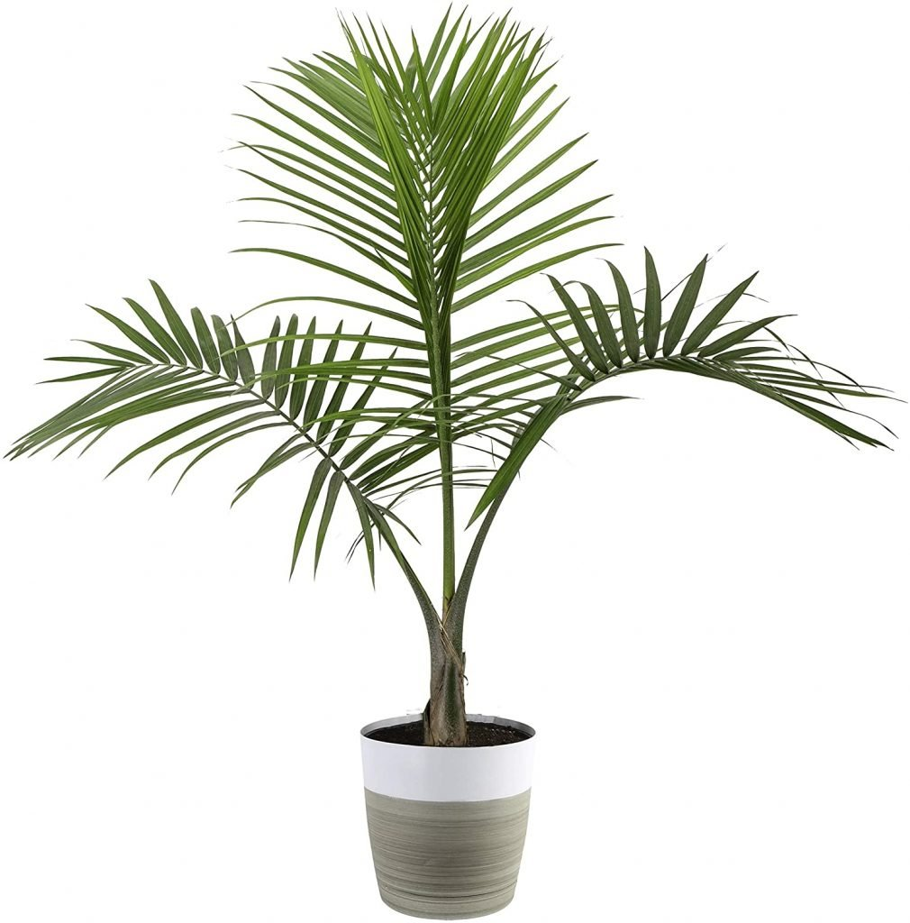 Indoor Plant Health Home Wedding Registry